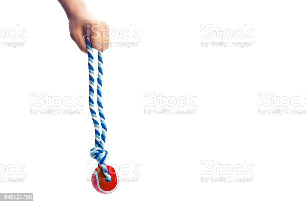 Hand holding a colorful dog rope isolated on white background picture id643525790?b=1&k=6&m=643525790&s=612x612&h=zblwz ylx6oytdsb3h t7ska0gqp5wtxdptjrvvwuso=