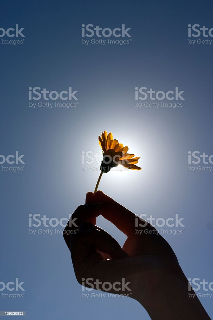 Hand holding a flower against the sun royalty-free stock photo