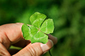 Horizontal view of a hand holding a freshly picked four leaf clover, a natural green good luck charm associated with Irish culture and St. Patrick's Day.