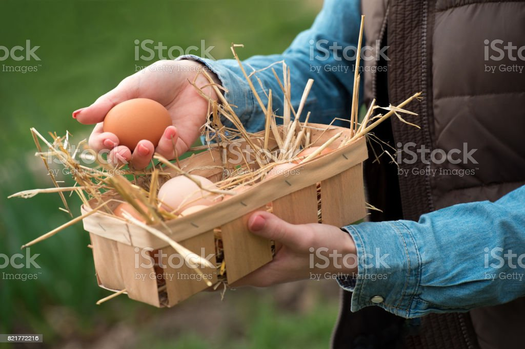A hand holding a fresh chicken egg and organic eggs in a basket with nest straw, soft focus stock photo