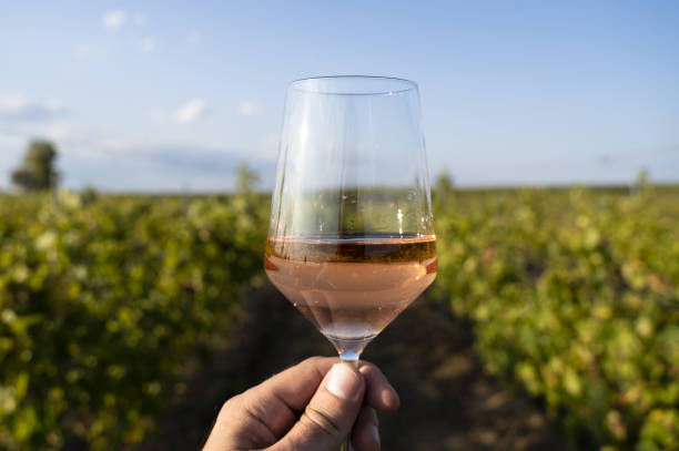 hand holding a glass of rose wine in front of vineyard stock photo
