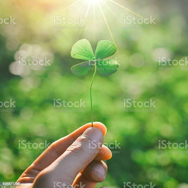 Hand holding a green clover leaf picture id636871798?b=1&k=6&m=636871798&s=612x612&h=2xdxtwzkqyr5jqedj7cts9r p6brxq 0zz go1hlyxu=