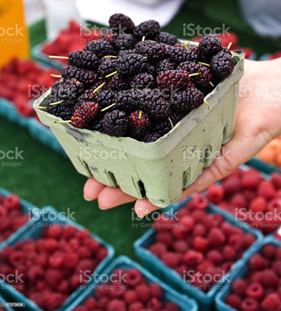 Hand holding a punnet of blackberries for sample royalty-free stock photo