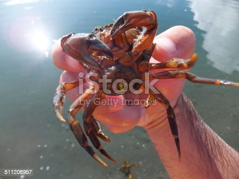 Man holding a red crab above water on a sunny day