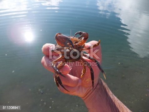 Man holding a red crab on a sunny day