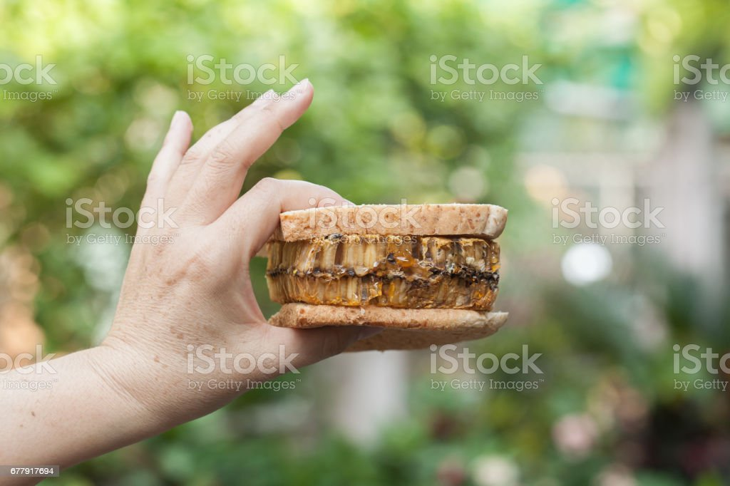 hand holding a sandwich honeycomb royalty-free stock photo