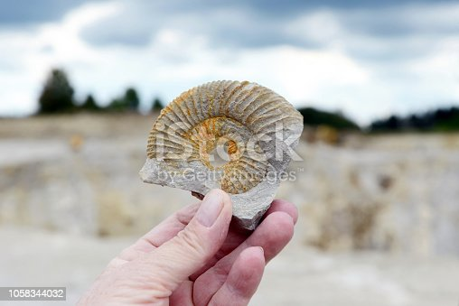 istock hand holding an ammonite fossil in limestone rock. 1058344032