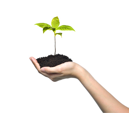 1089961140 istock photo Hand holding and caring a green young plant isolated on white background 1128691018