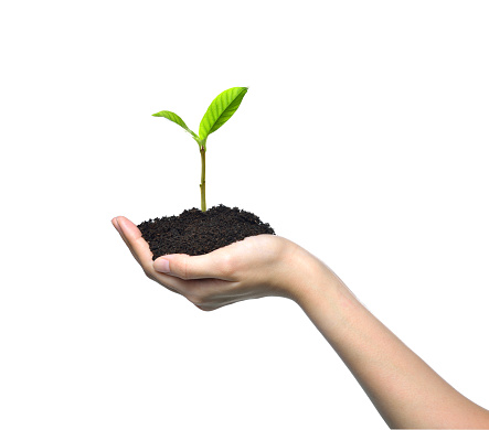 1089961140 istock photo Hand holding and caring a green young plant isolated on white background 1128691025