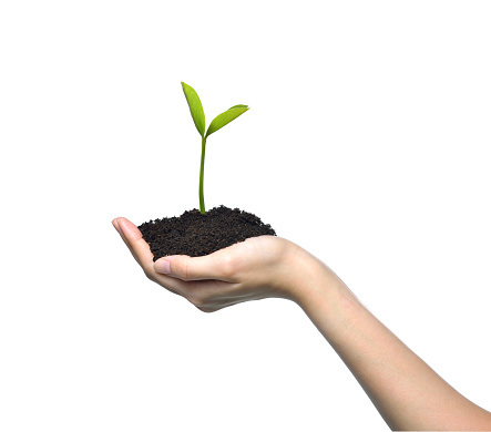 1089961140 istock photo Hand holding and caring a green young plant isolated on white background 1128691028