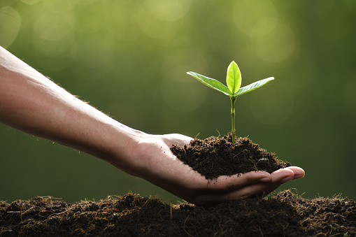 1089961140 istock photo Hand holding and caring a green young plant 1089961164