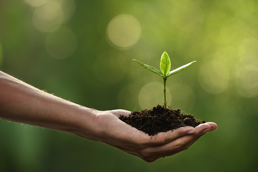 1089961140 istock photo Hand holding and caring a green young plant 1089961170