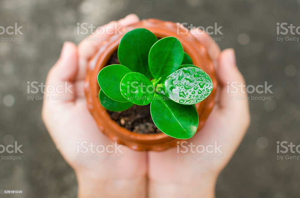 hand holding and caring a young green plant stock photo