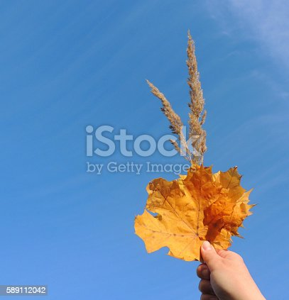 istock Hand holding autumn leaves against the sky. 589112042