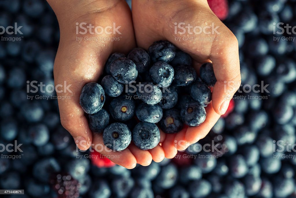 Hand holding berries royalty-free stock photo