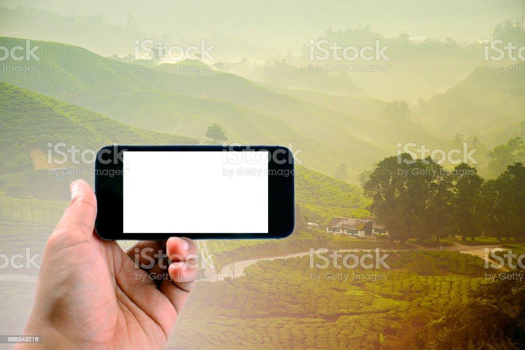 Hand hält schwarz Telefon auf Tee-Plantage hintergrund isoliert – Foto