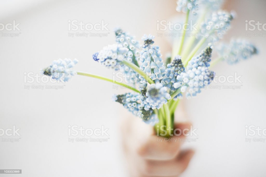 Hand holding bouquet of grape hyacinths
