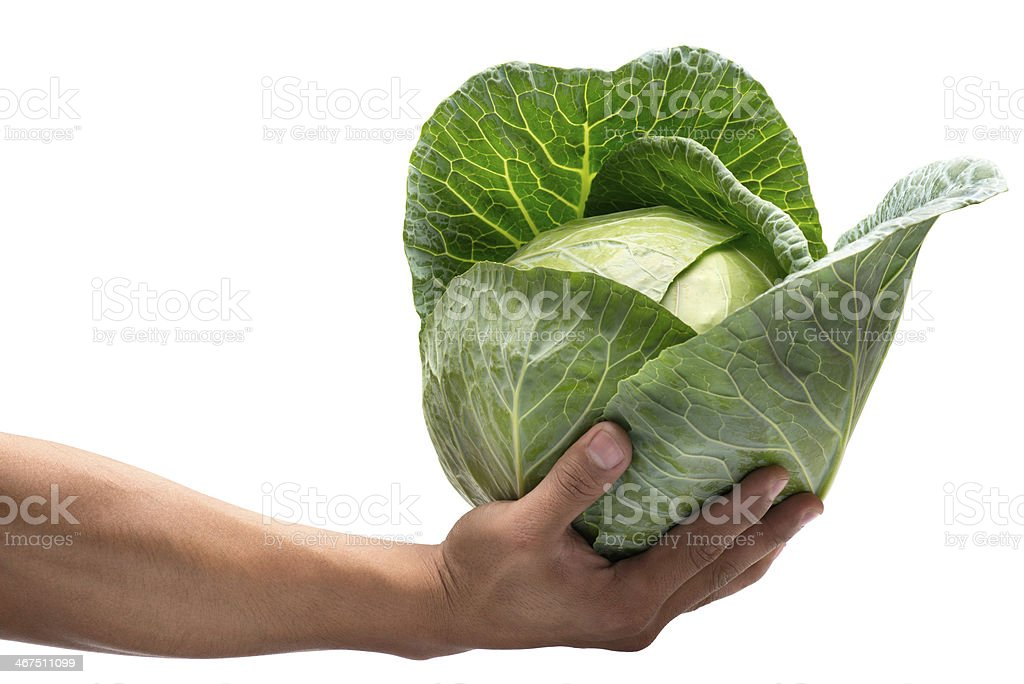 hand holding cabbage royalty-free stock photo