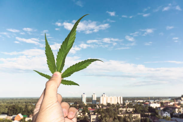 hand holding cannabis leaf at blurred background - legalizzazione foto e immagini stock