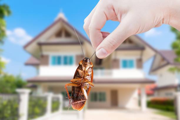 hand holding cockroach on house background, eliminate cockroach in house - attrezzatura per la disinfestazione foto e immagini stock