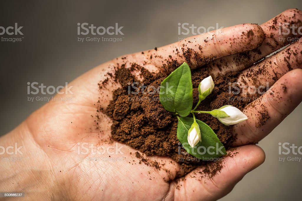 Hand Holding Dirt and Growing Flower stock photo