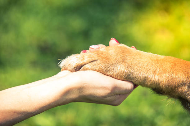 hand holding dog paw, relationship and love concept - canide foto e immagini stock