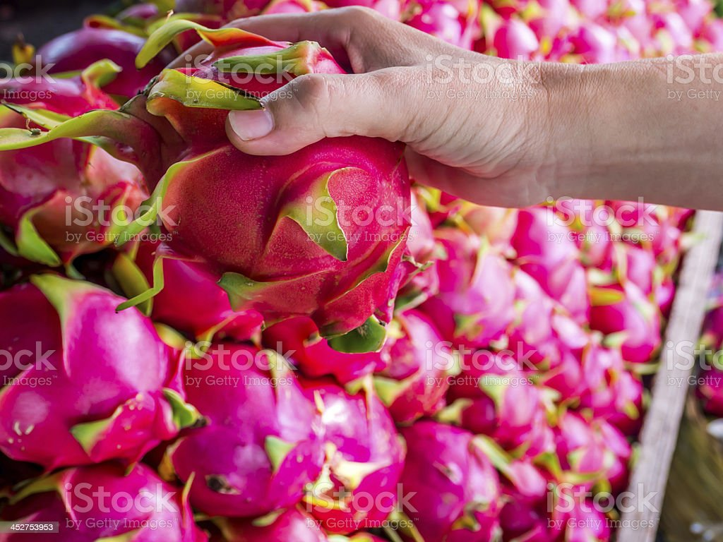 Hand holding Dragon fruits royalty-free stock photo