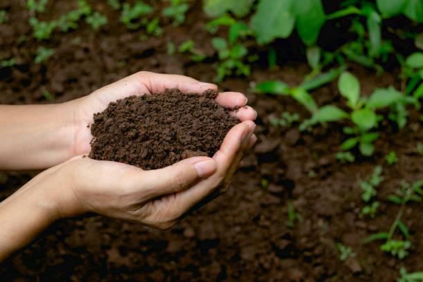 doğa kavramı içinde büyüyen için verimli toprak bitki için tutan el. - toz stok fotoğraflar ve resimler