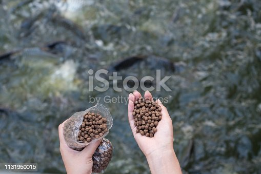 Hand holding fish feeding and other fish species. A hobby.