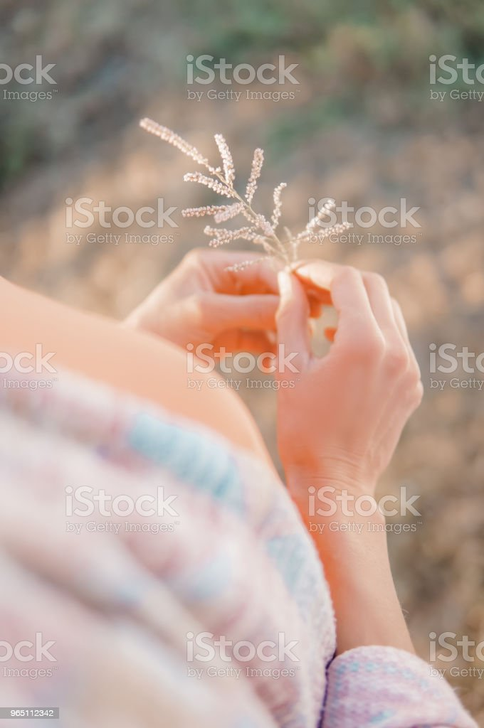 Hand holding flower royalty-free stock photo