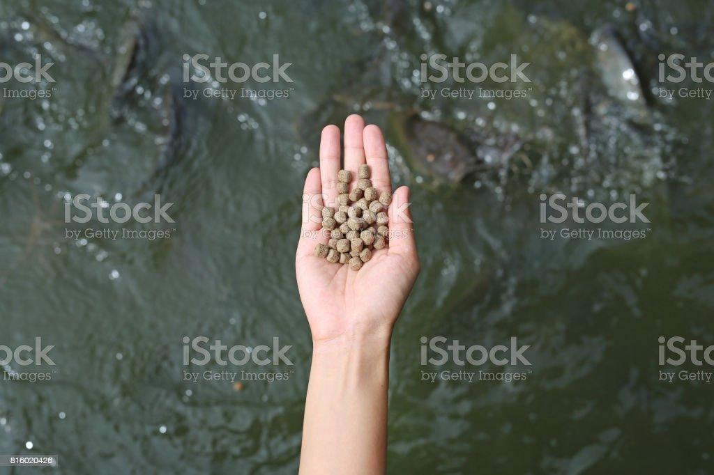 手池の魚を供給するための食品です。 ストックフォト