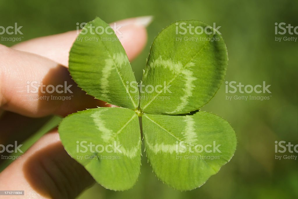 Hand Holding Four Leaf Clover for St. Patrick's Day Luck stock photo