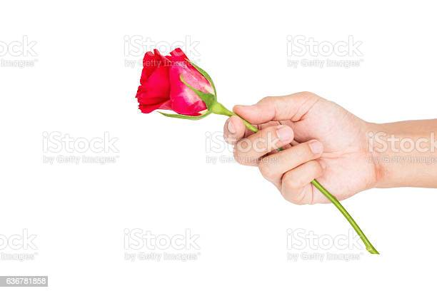 Hand holding giving rose flower isolated on white background picture id636781858?b=1&k=6&m=636781858&s=612x612&h=ucdvnd00oro9wl31rf6iziluughcrx1ibm hasbmoau=