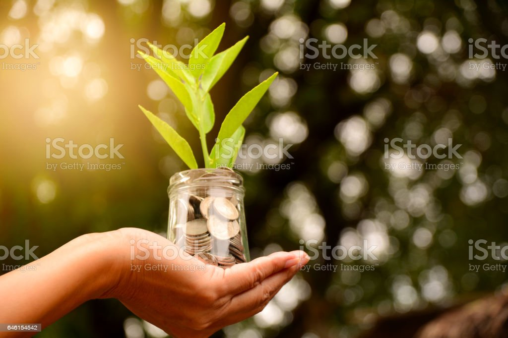 Hand holding glass jar and have plant on coins stock photo