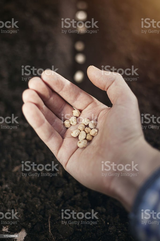 Hand holding grain royalty-free stock photo