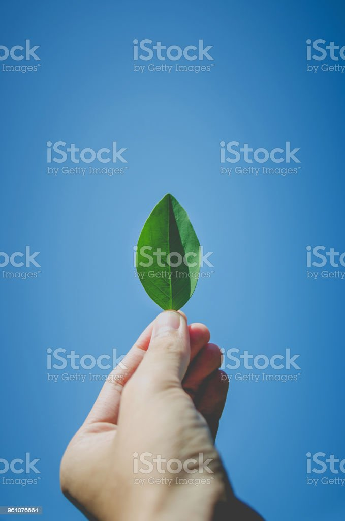 Hand holding green leaf and green leaves on hand with growing concept. - Royalty-free Autumn Stock Photo