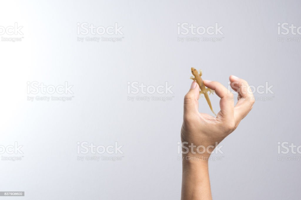 Hand holding house gecko toy stock photo