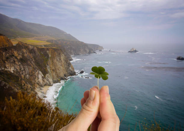 hand holding leaf clover. irish cliffs background. - cliffs of moher stock pictures, royalty-free photos & images