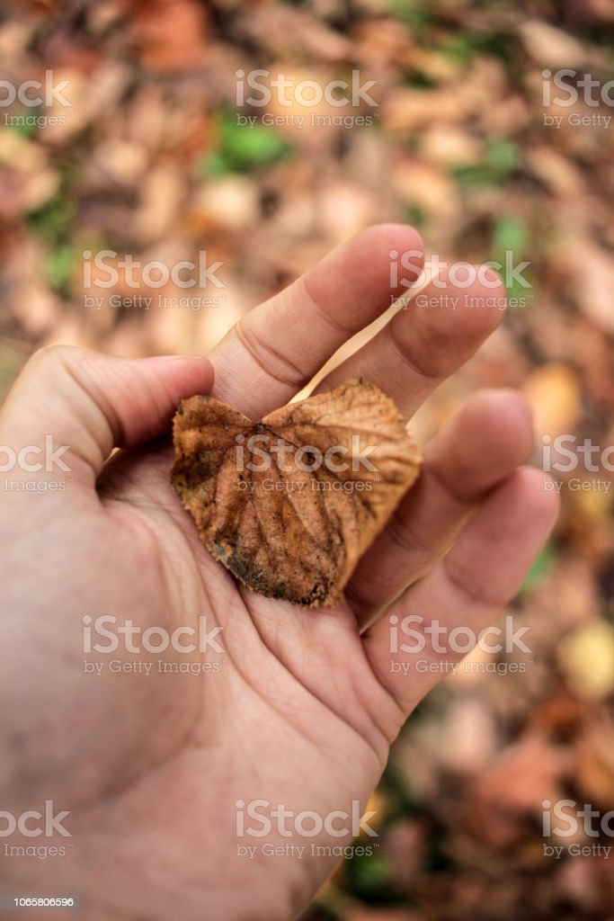 Hand Holding Leaf - foto stock