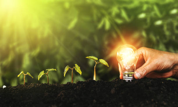 Hand holding light bulb and plants on soil. Concept saving energy in nature, business, save, growth and succes. Idea and innovation stock photo