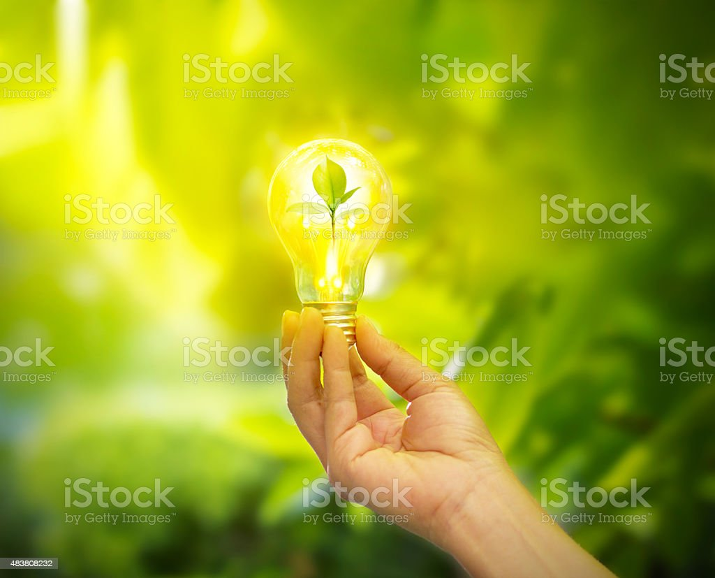 hand holding light bulb with energy, fresh green leaves inside stock photo