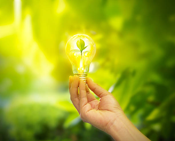 hand holding light bulb with energy, fresh green leaves inside - environmental conservation stock photos and pictures