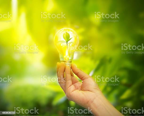 Photo of hand holding light bulb with energy, fresh green leaves inside