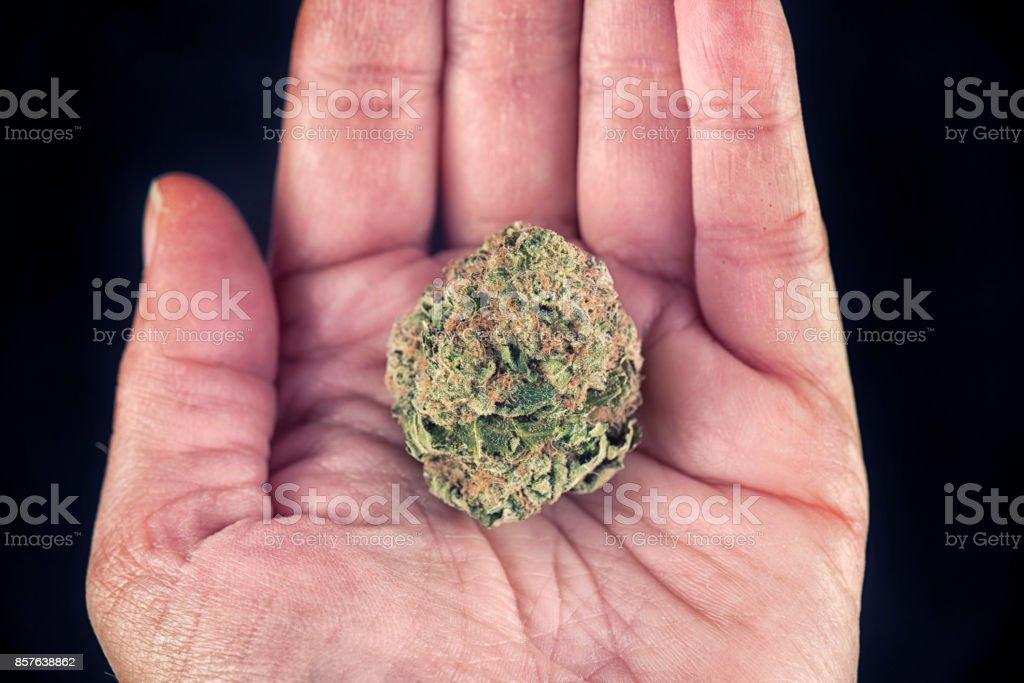 Hand holding marijuana bud stock photo