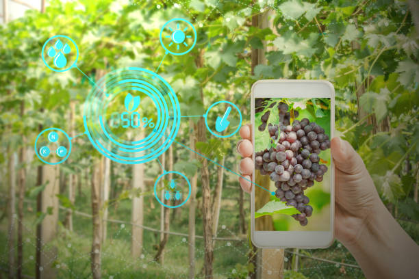 hand holding mobile phone inspecting grapes in agriculture garden with concept modern technologies - hand holding phone стоковые фото и изображения