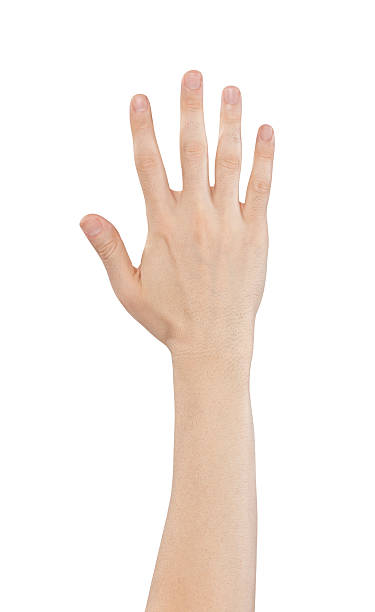hand holding out five fingers isolated on a white background - human arm stock pictures, royalty-free photos & images