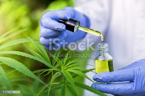 istock Hand holding Pipette with cannabis oil against Cannabis plant, CBD Hemp oil, medical marijuana oil concept 1174218555