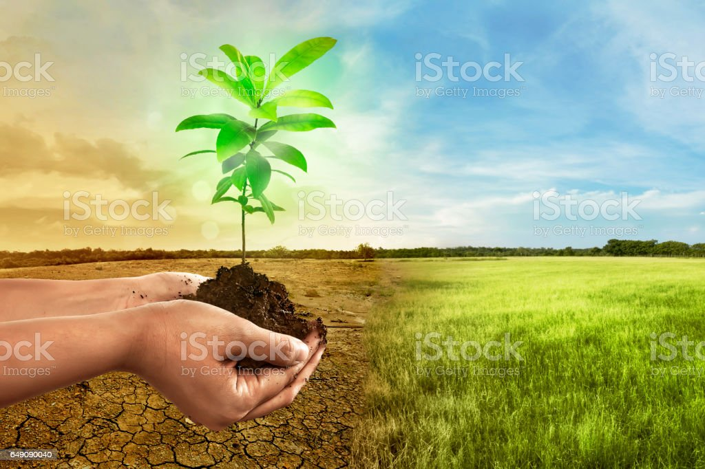 Hand holding plant on soil in over cracked earth stock photo