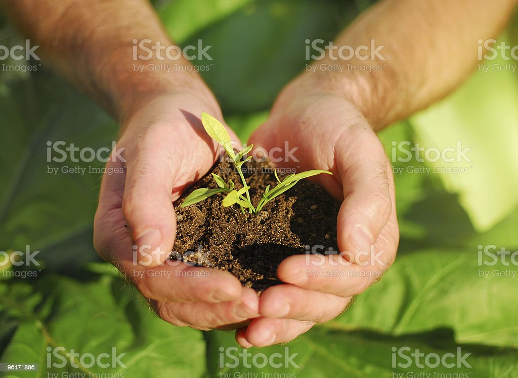 hand holding plant royalty-free stock photo