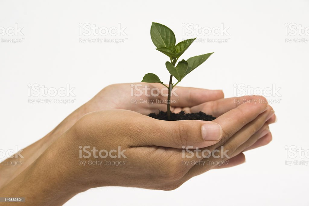Hand holding seedling royalty-free stock photo